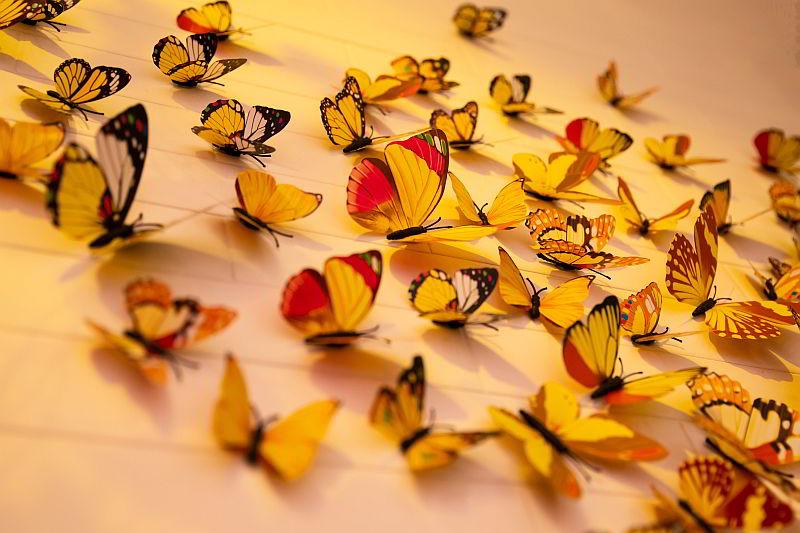 бабочки сновидения