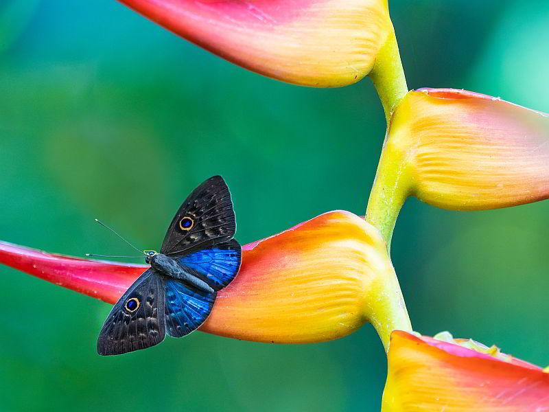 бабочка сновидения